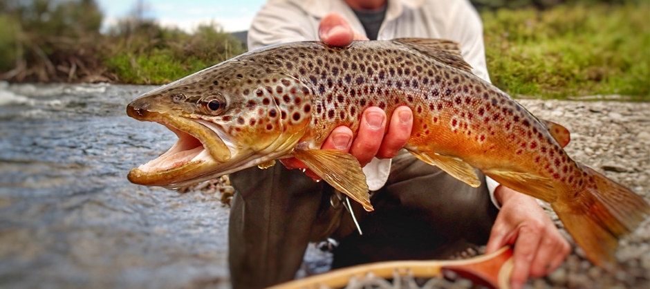 Gunnison Fly Fishing Guides   Taylor River Fly Fishing Guides