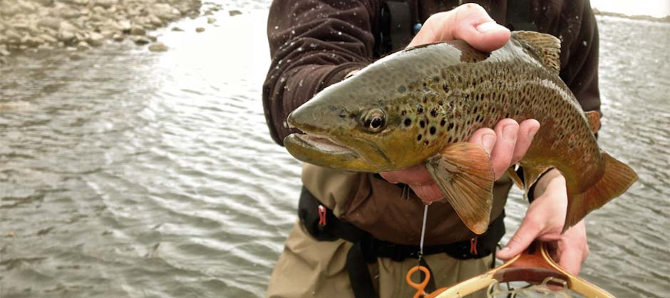 Gunnison fly fishing guides taylor river fly fishing for Colorado fly fishing trips