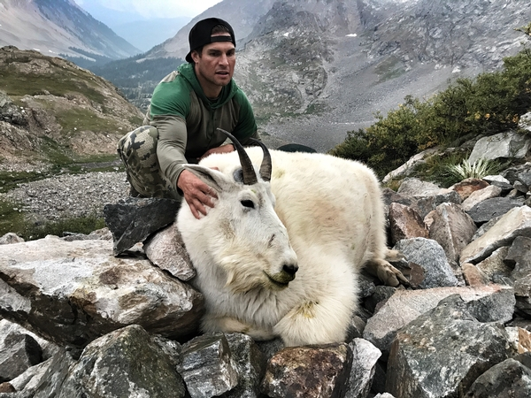 Mountain Goat Photo