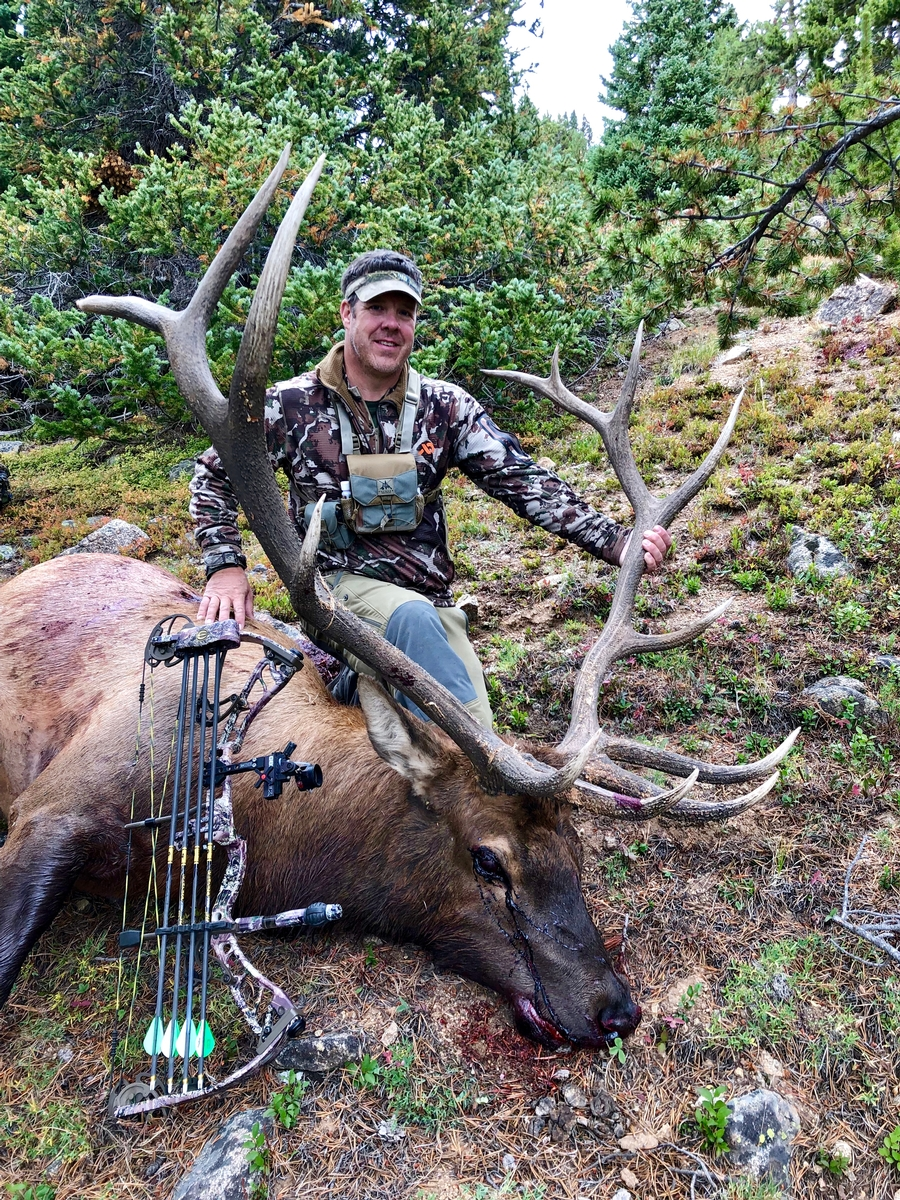Archery Elk Photo