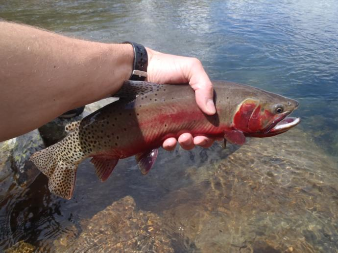 Aei guide and outfitter fly fishing photo 77 for Denver fly fishing guides