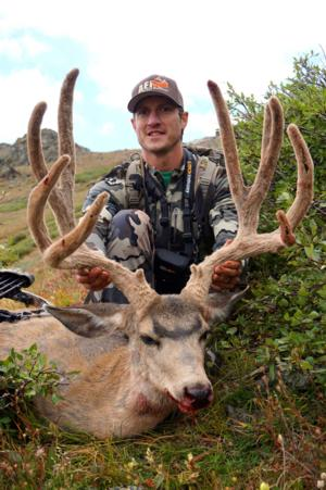 Lewie's Colorado High Country Mule Deer