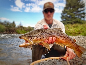 Big Brown - Fly Fishing Gunnison Country